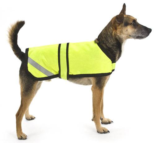 dog jackets WFKRYNW