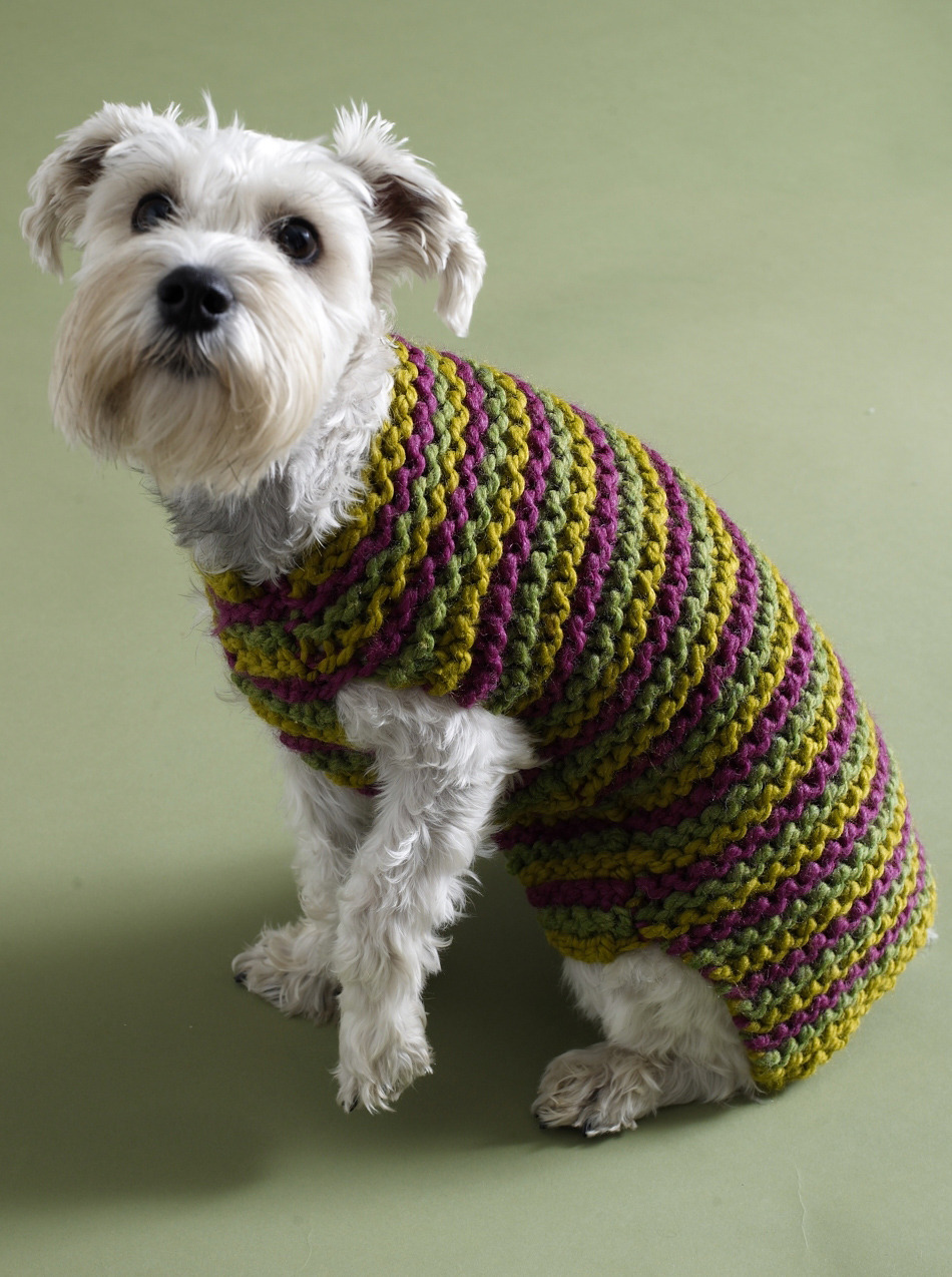 dog sweater knitting pattern 5 free dog sweater knitting patterns - on the loveknitting blog! UQGJVQA