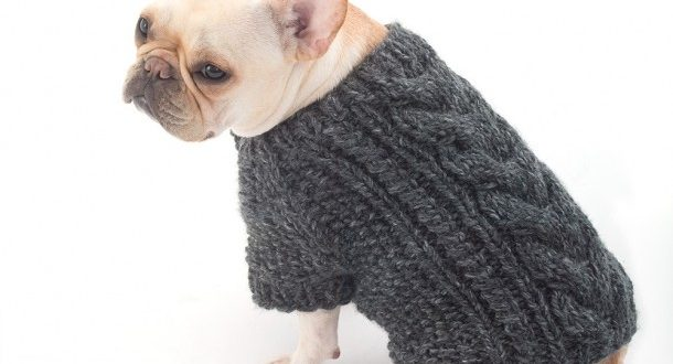 Three Great Dog Sweater Knitting Pattern To Keep Your Dog Warm