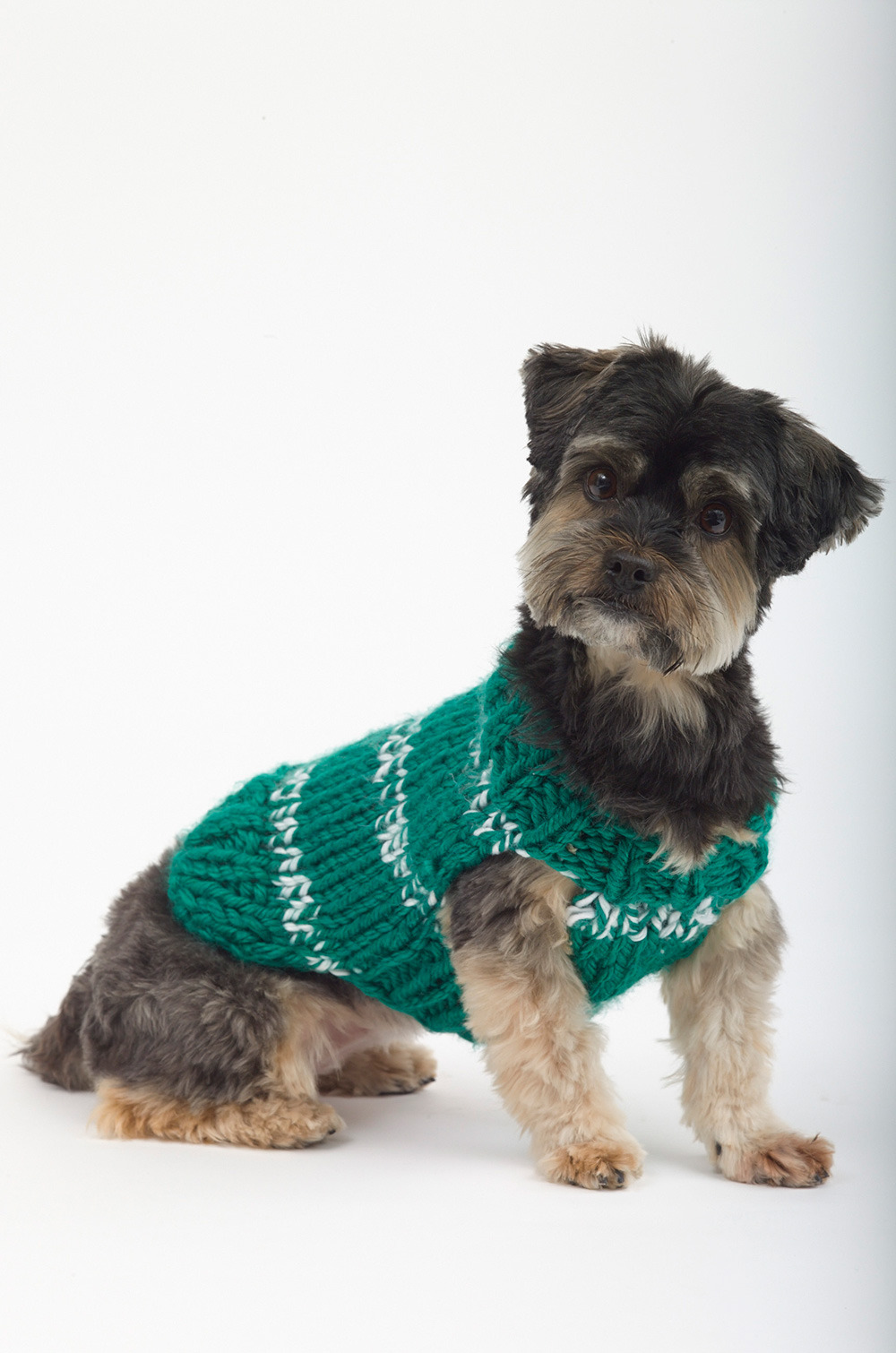 dog sweater knitting pattern top 5 free dog sweater knitting patterns, on the loveknitting blog! MGDOXGU