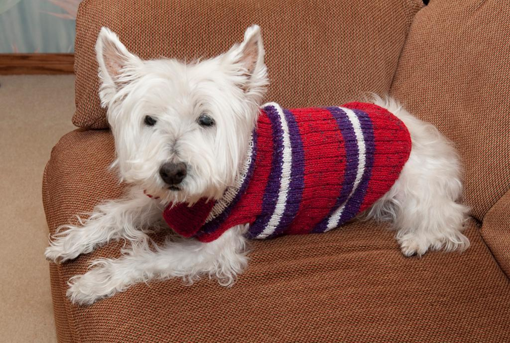 dog sweater knitting pattern view in gallery striped sweater RUZVWFU