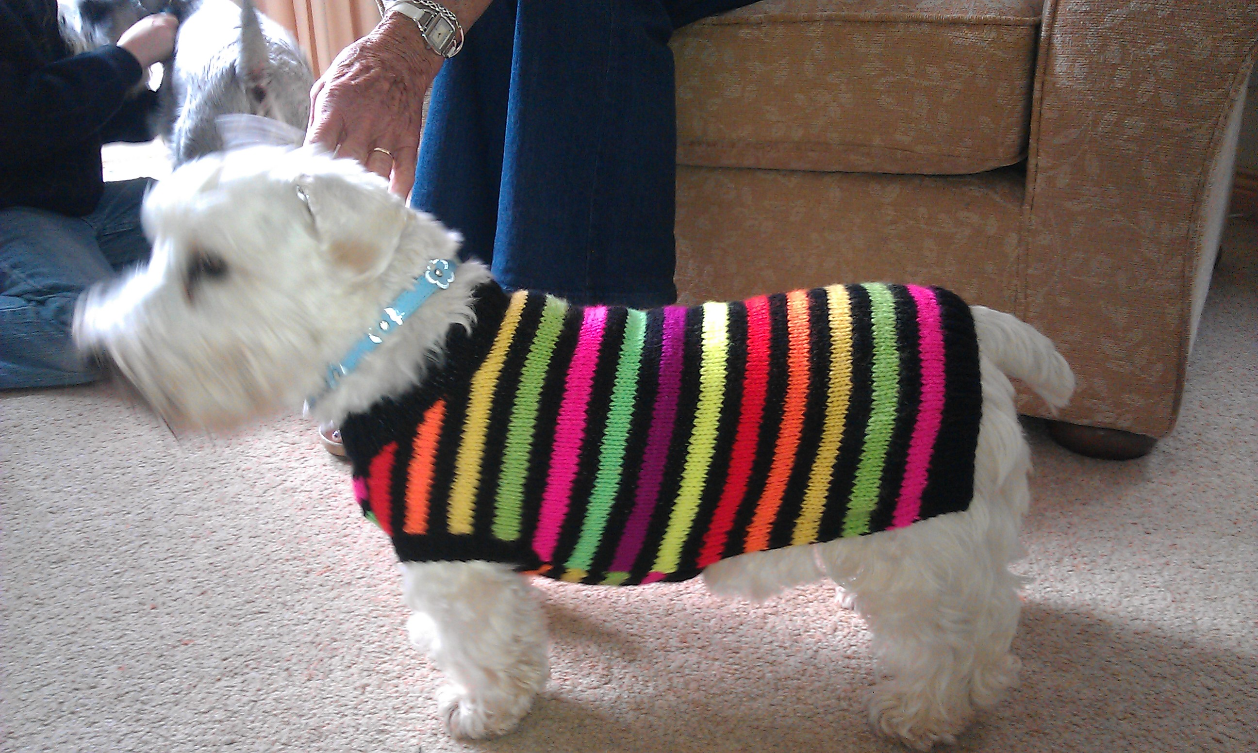Dog Coat Knitting Pattern : What you need to know about knitted dog coats