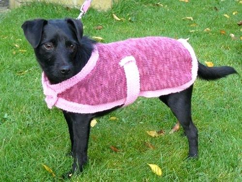 Knitting For Dogs Knitted Dog Coat Knitting Patterns Dogs Sweaters