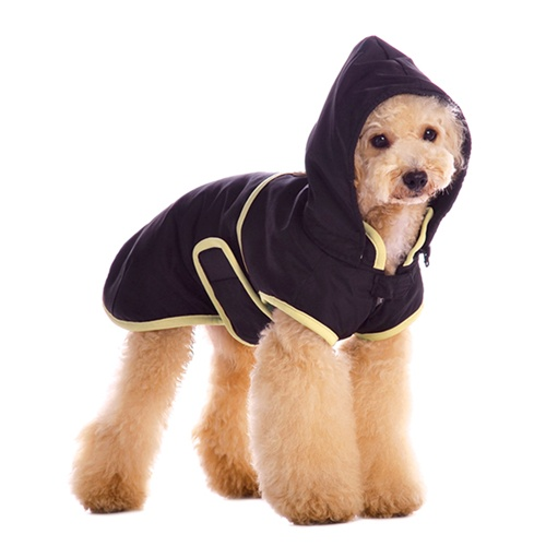 The man's best friend and dog jackets