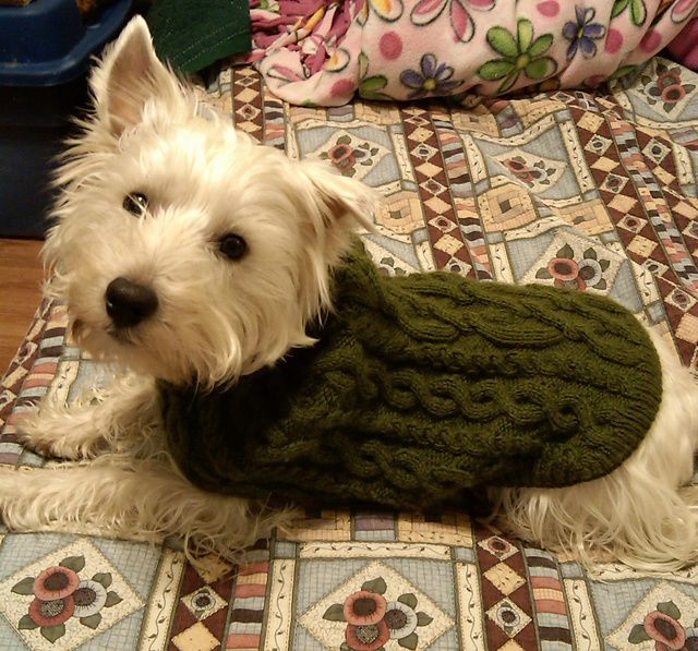 dog sweater knitting pattern ravelry: knitted dogcoat in u201dkarismau201d with cable pattern pattern by drops  design. dog sweater EJBSJUO