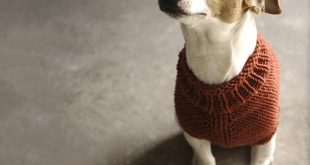 knitted dog coats top 5 free dog sweater knitting patterns on the loveknitting blog! LMZJASQ