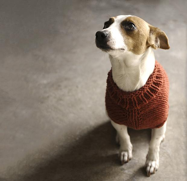 What you need to know about knitted dog coats