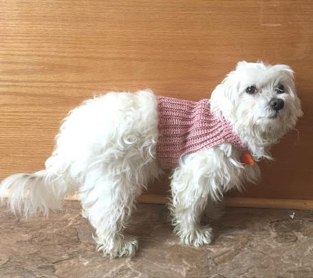 26 Free Crochet Dog Sweater Patterns | Guide Patterns